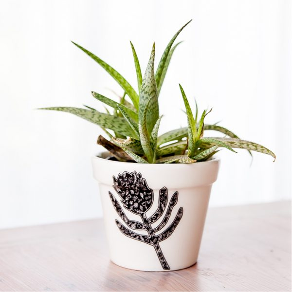 Planters for Sale - Protea handmade ceramic planter online - Sugar and Vice - South Africa