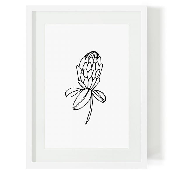 Illustrated Protea Minimalist Digital Download Art Print Online - Sugar and Vice - 2000 x 2000px