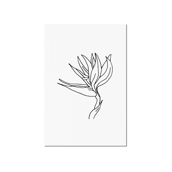 Illustrated Strelitzia Minimalist Digital Download Art Print Online - Sugar and Vice - 2000 x 2000px3