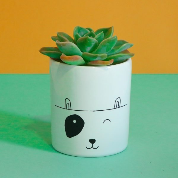 Illustrated Spotty Dog Illustration Jar, Mugs and Planter Online - Sugar and Vice - 2000 x 2000px