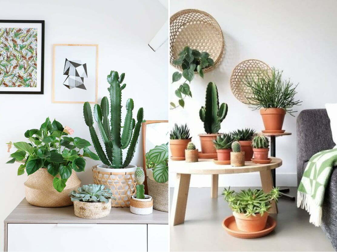 Container Gardening Sugar and Vice Planters Online